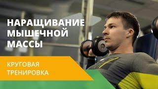«Круговая тренировка». Наращивание мышечной массы. Energy Life NL
