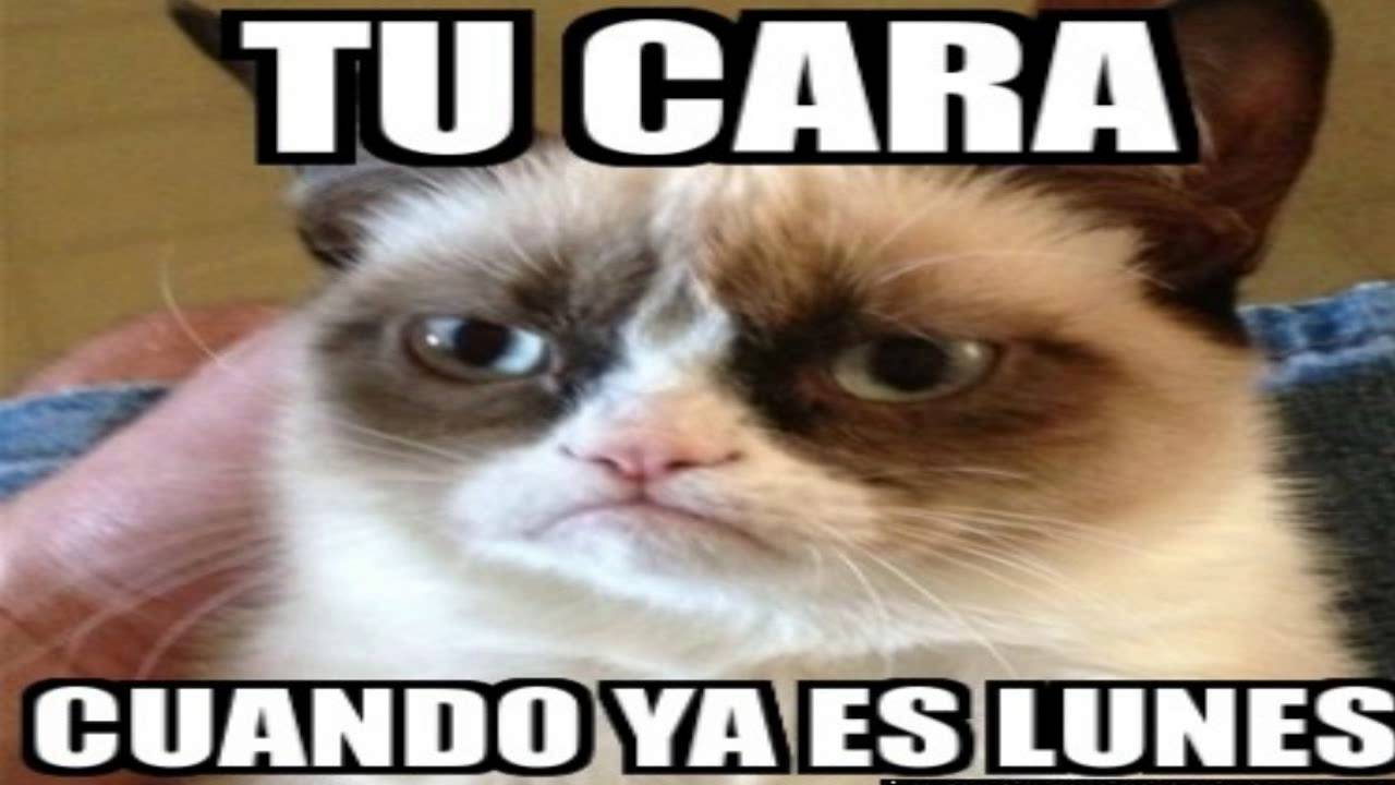 Sección Memes | Noooo Hoy es lunes - YouTube