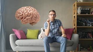 Эволюция головного мозга человека. Функции мозга на каждом этапе его развития. Мозг часть 1.