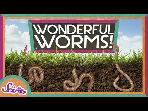 Worms Are Wonderful