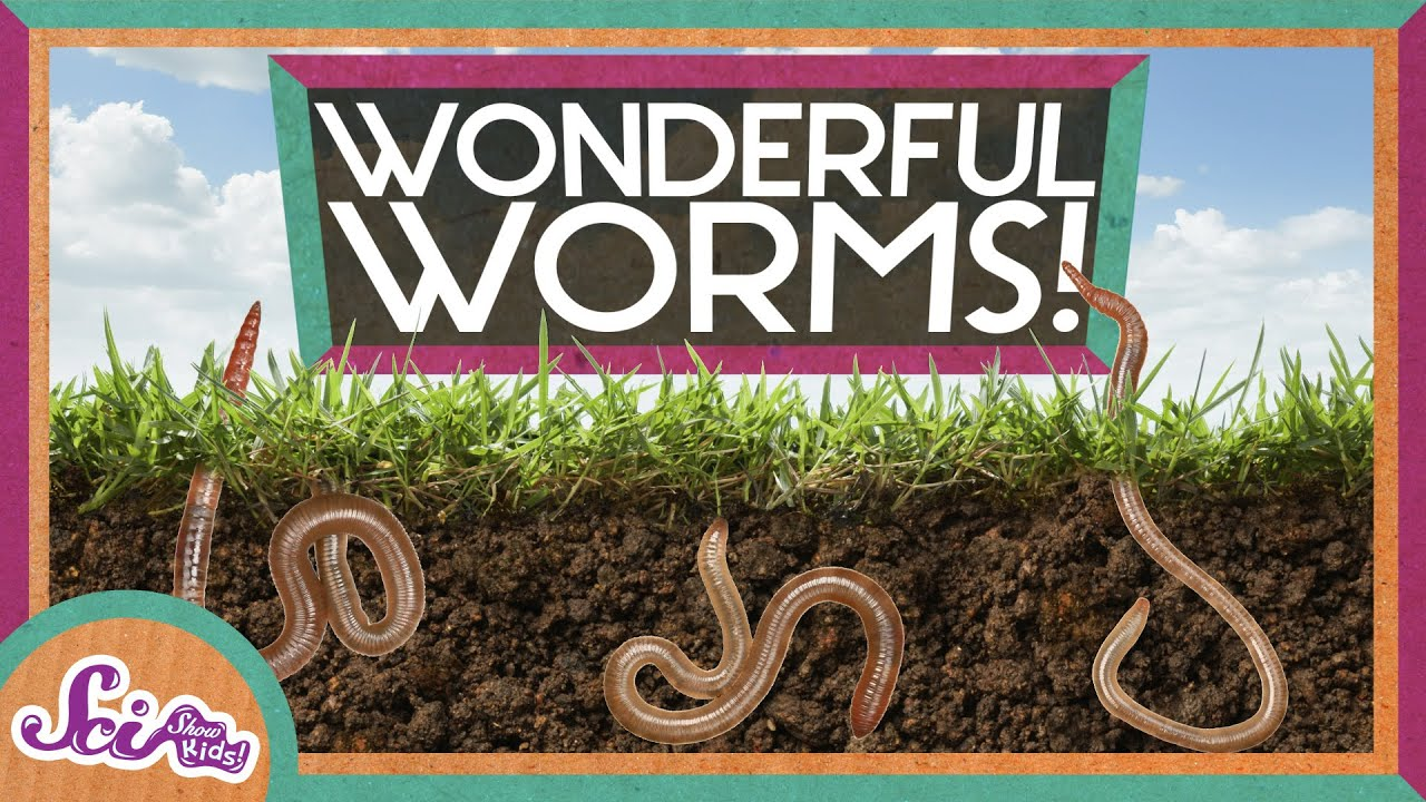 worms are wonderful [ 1280 x 720 Pixel ]