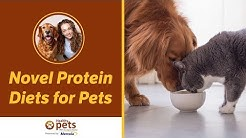 Novel Protein Diets for Pets