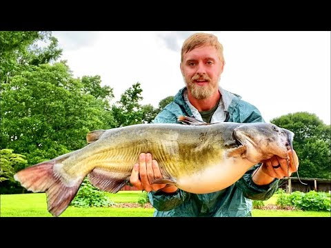 GIANT Catfish Caught While Bass Fishing! #shorts