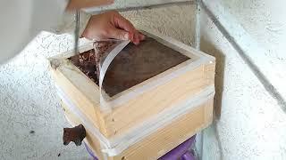 Reforço, revisão e manejo nas abelhas Tubuna