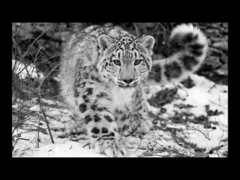 Animals in danger 2016