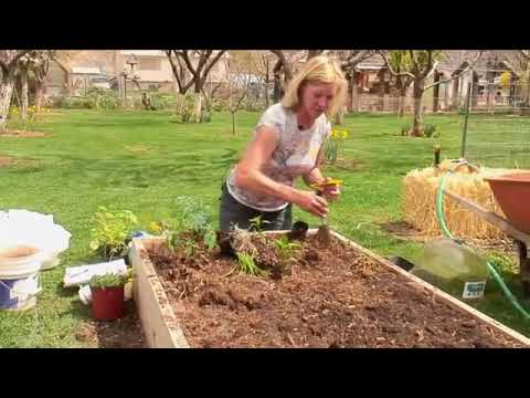 How to Plant Raised Vegetable Beds