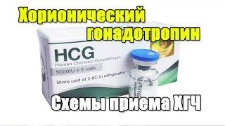ХГЧ Хорионический гонадотропин человека Схемы приема на курсе и ПКТ