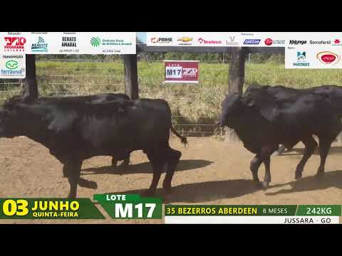 LOTE M17