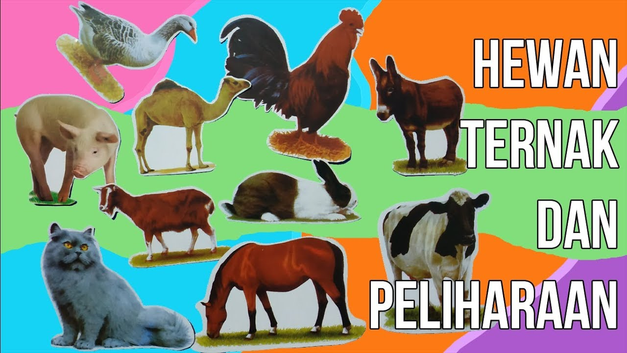 1040 Gambar Hewan Ternak Dalam Bahasa Inggris Hd Terbaik Gambar Hewan
