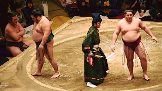 2017.02.05日本大相撲トーナメント第四十一回大会①⑦遠藤VS千代大龍(二回...