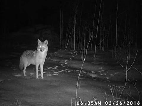 Wildlife Camera Video