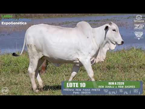 LOTE 10 - Leilão Genética Aditiva ExpoGenética 2019