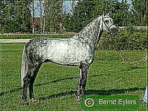 White/Grey Horses