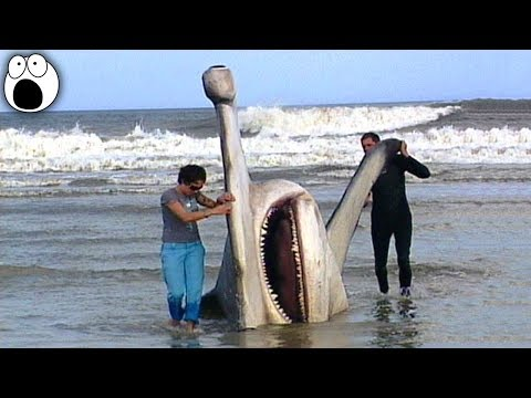 The Most Monstrous Creatures That Have Ever Been Caught