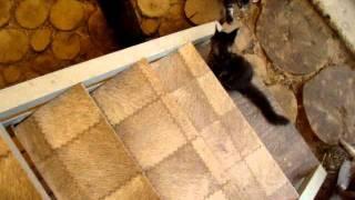 Фильм о мейн кунчиках питомника Catsvill County мэйн кун