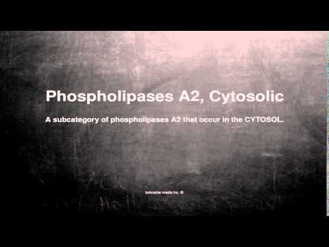 Medical vocabulary: What does Phospholipases A2, Cytosolic mean