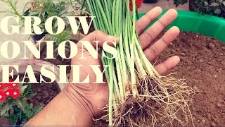 How to Grow Big Onions