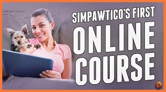 Simpawtico's First Online Dog Training Course!