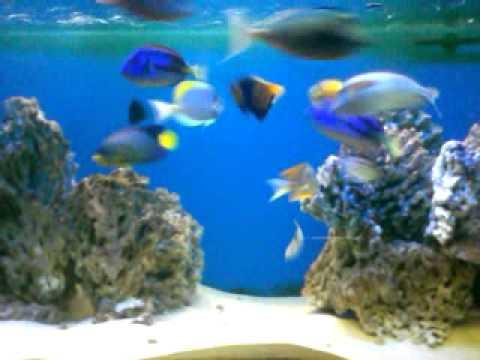Download 99+ Gambar Ikan Video Keren Gratis