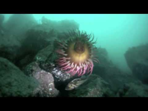 Ogden Point Breakwater - SCUBA Dive Victoria B.C.