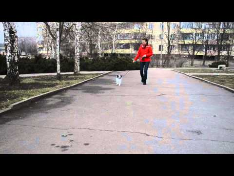 2016-02-28, Stepovyj Viter, walk part