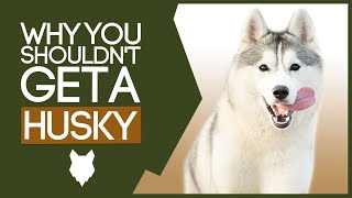 SIBERIAN HUSKY! 5 Reasons Why YOU SHOULDN'T Get a Husky Puppy!