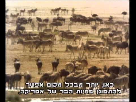 סדרת הראני נפלאות - אפריקה
