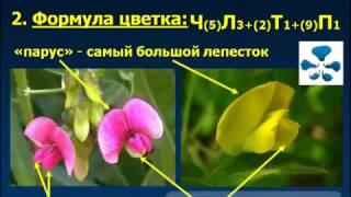 характеристика покрытосеменных растений