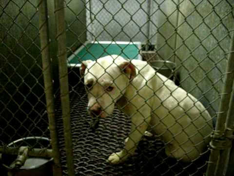 memphis-animal-shelter-walk-through