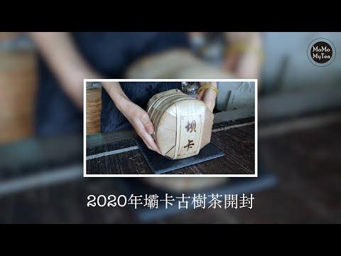 【普洱茶開箱】2020年壩卡古樹純料