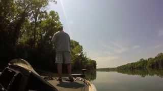 Worm Fishing around wood on upper Guntersville