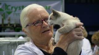 Burmese Cat Club. Coventry 2017