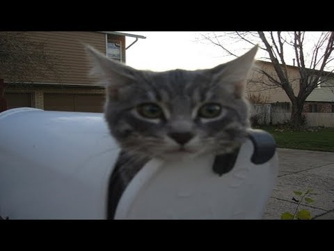Cats Waits For The Mailman | Cat VS The Mailman Video Compilation