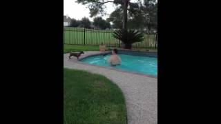 Dachshund Racing Swimmer - Dachshund Rescue Of Houston