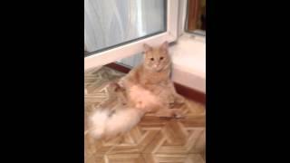 Кот писька наружу!!