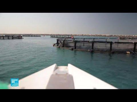 دبي تربي أسماك بحيرات إيسلندا الباردة في قلب الصحراء  - 13:00-2019 / 12 / 10