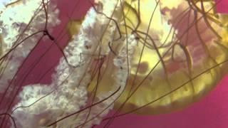 Shedd Aquarium - Chicago Il (jellies Exhibit)