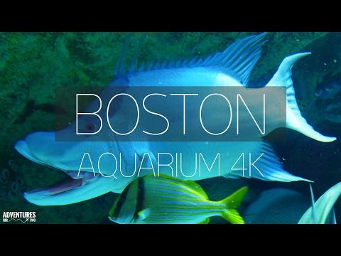 BOSTON AQUARIUM IN 4K (ULTRA HD)