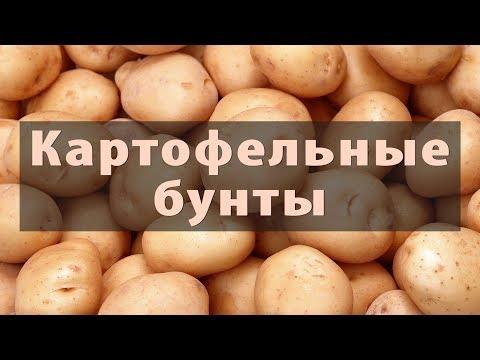Картофельные гиганты: Китай,