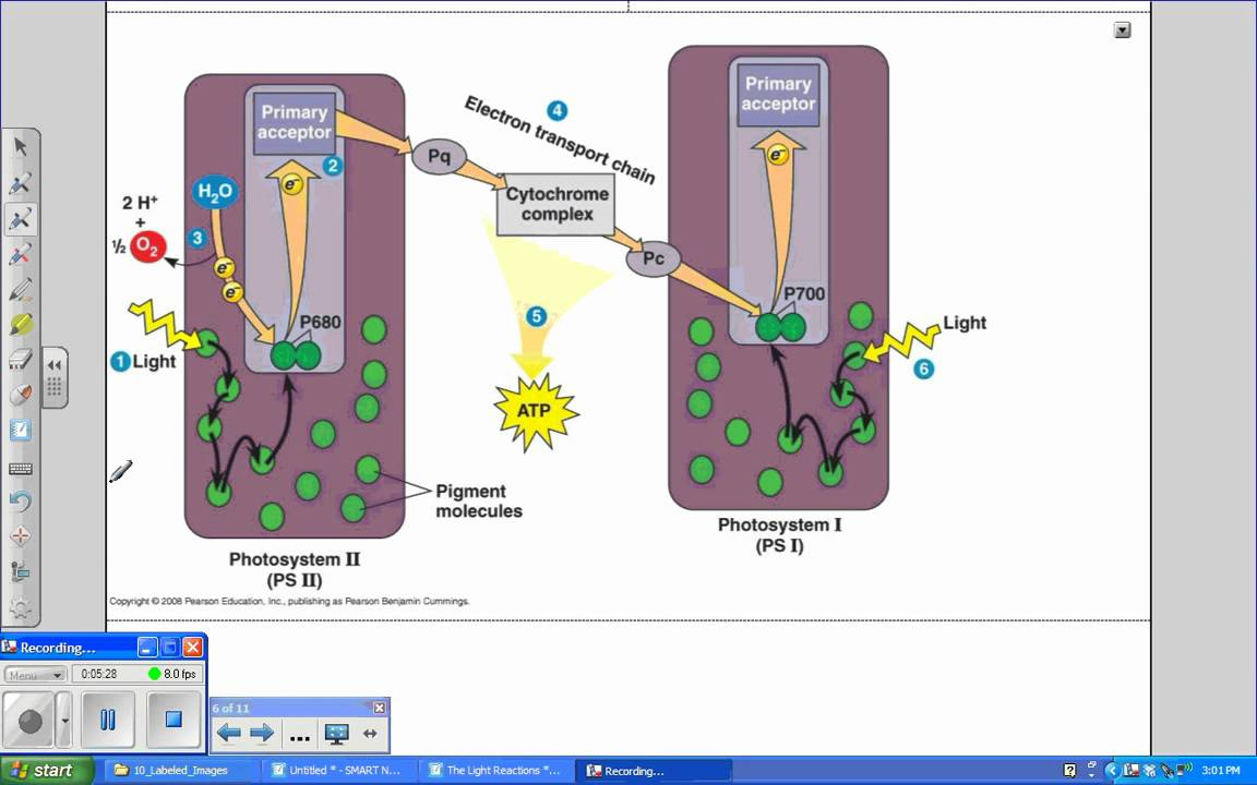 Photosynthesis ii light reactions tutorialwmv youtube photosynthesis ii light reactions tutorialwmv pooptronica Images