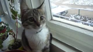 Рысенок смотрит в окно