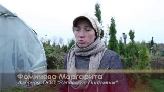 БАС ТВ Яблоневый сад в Полесске Калининградская область