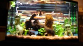 Petstore Employees 46 Gallon Aquarium