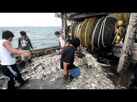 WWF-Malaysia Marine Programme: Deep Dive to Protect Our Magnificent Ocean (Short Version)