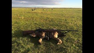 Охота на гусей 2016 осень