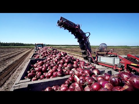 World Modern Agriculture Technology - Broccoli, Cabbage, carrot, onion Harvesting machine 2021