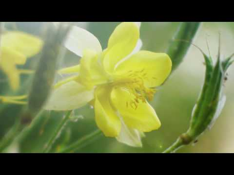 "Peaceful Music, Relaxing Meditation Music, Instrumental ""Golden Summer Light"" By Tim Janis"