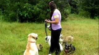 Off Leash Recall Assorted Breeds And Deaf Dog Training Dogtra E Collar Pager