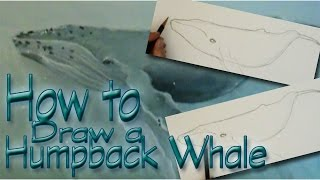 How to draw a Humpback Whale