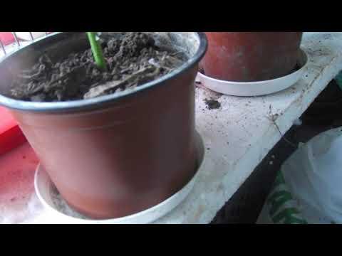 Holunder vermehren -